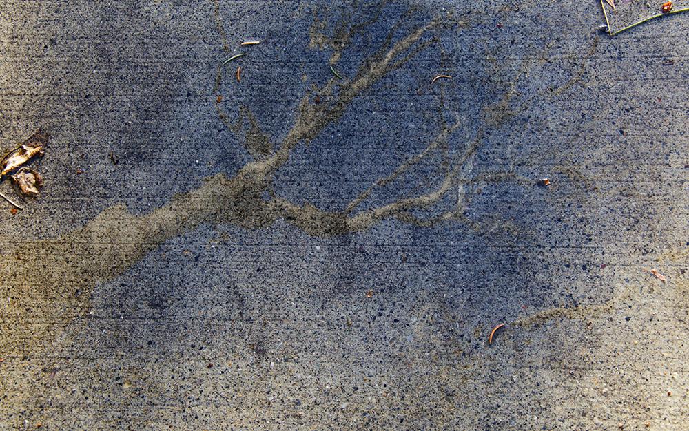 Tree_6013.jpg