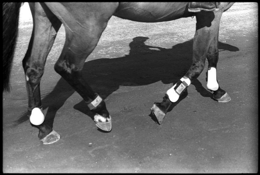 Horse007©ChesherCat.jpg
