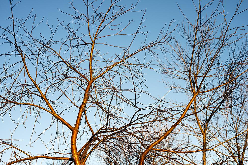 Trees_6179.jpg