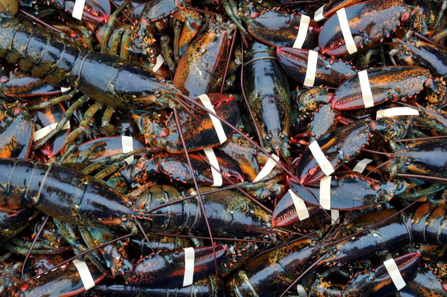 Lobster_9297©ChesherCat.jpg