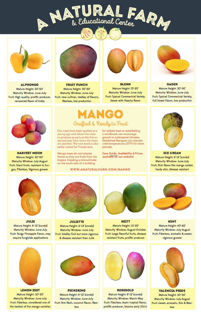 Mango Tree Grafted Priority Shipping Included - Many varieties available -  Not certified organic — A Natural Farm