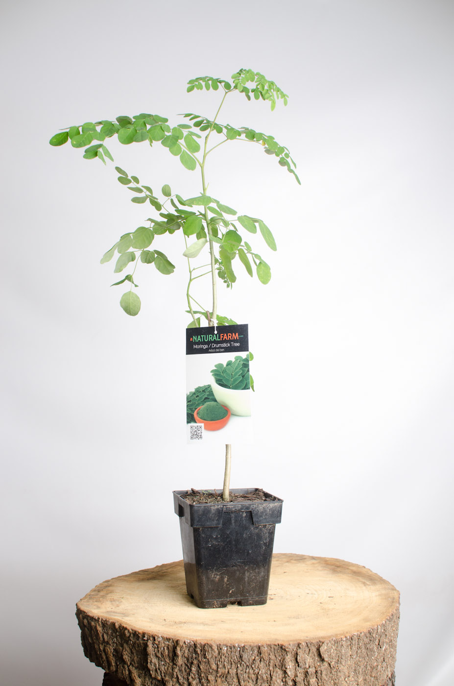 Organic Moringa Seeds Free Shipping Chemical Free And Grown On Our Farm A Natural Farm