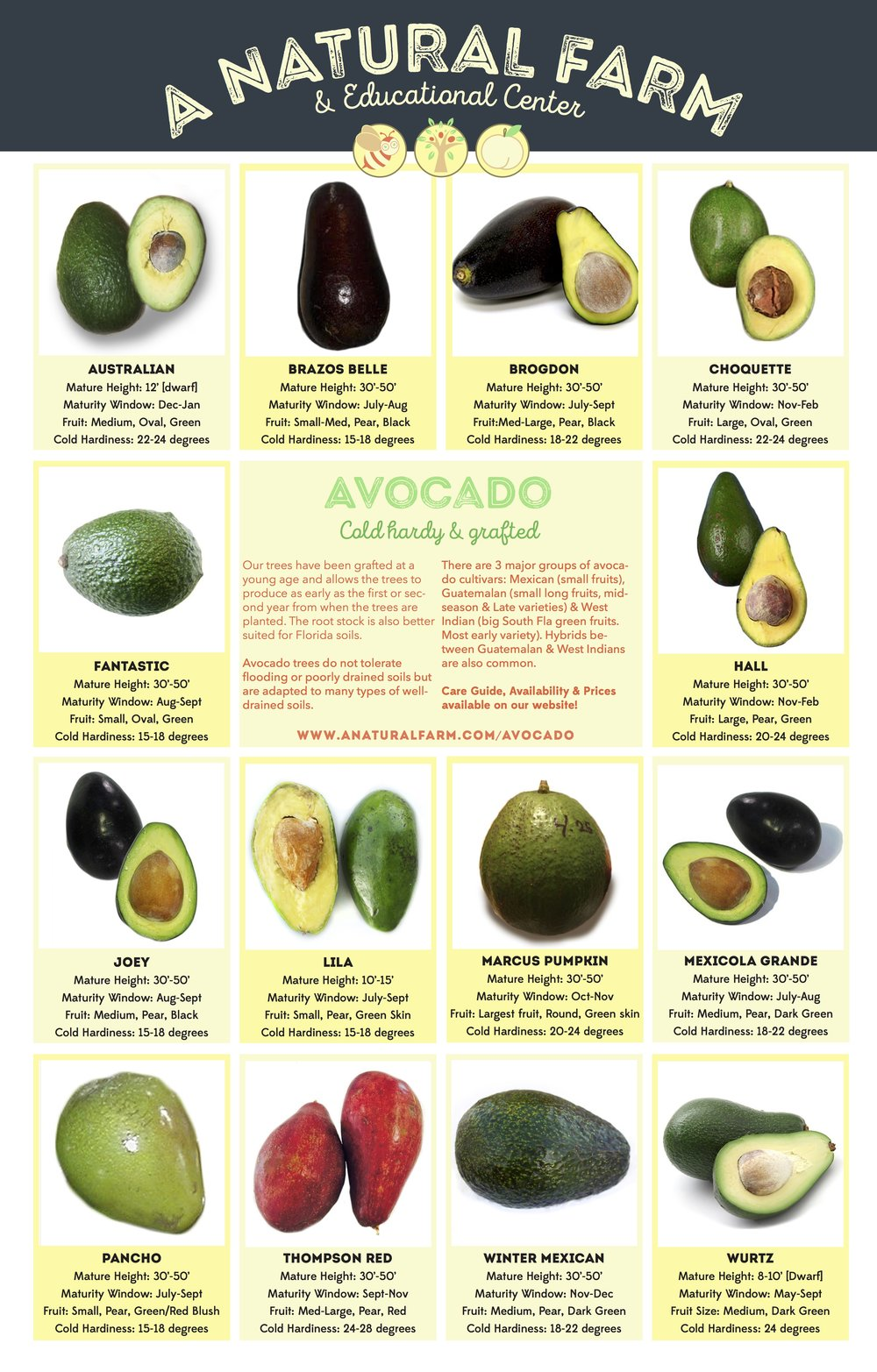 'Marcus Pumpkin' has very high cold tolerance avocado 2 seeds