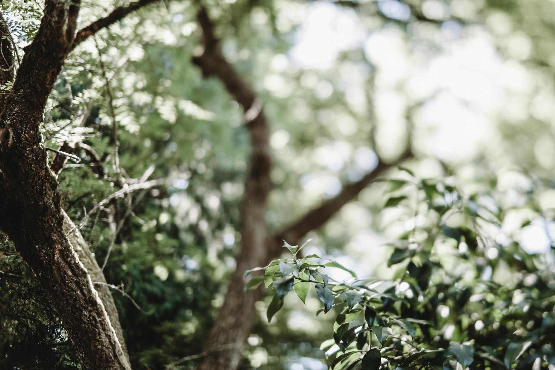 jess-hunter-seattle-artistic-wedding-photographer-4026.jpg