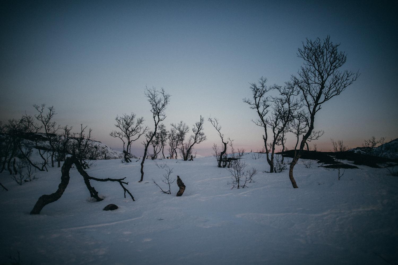 vogelsfotos geschichten portfolio destination norwegen tromsö-010.jpg