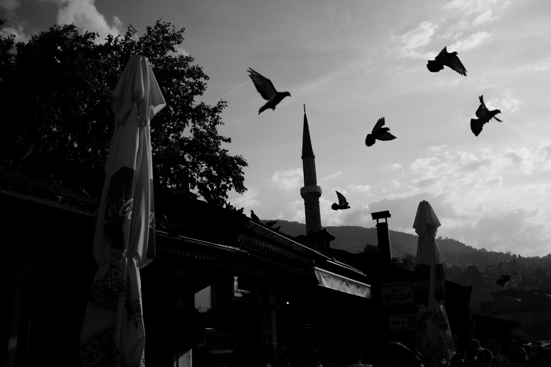 vogelsfotos portfolio geschichten spitanien-014.jpg