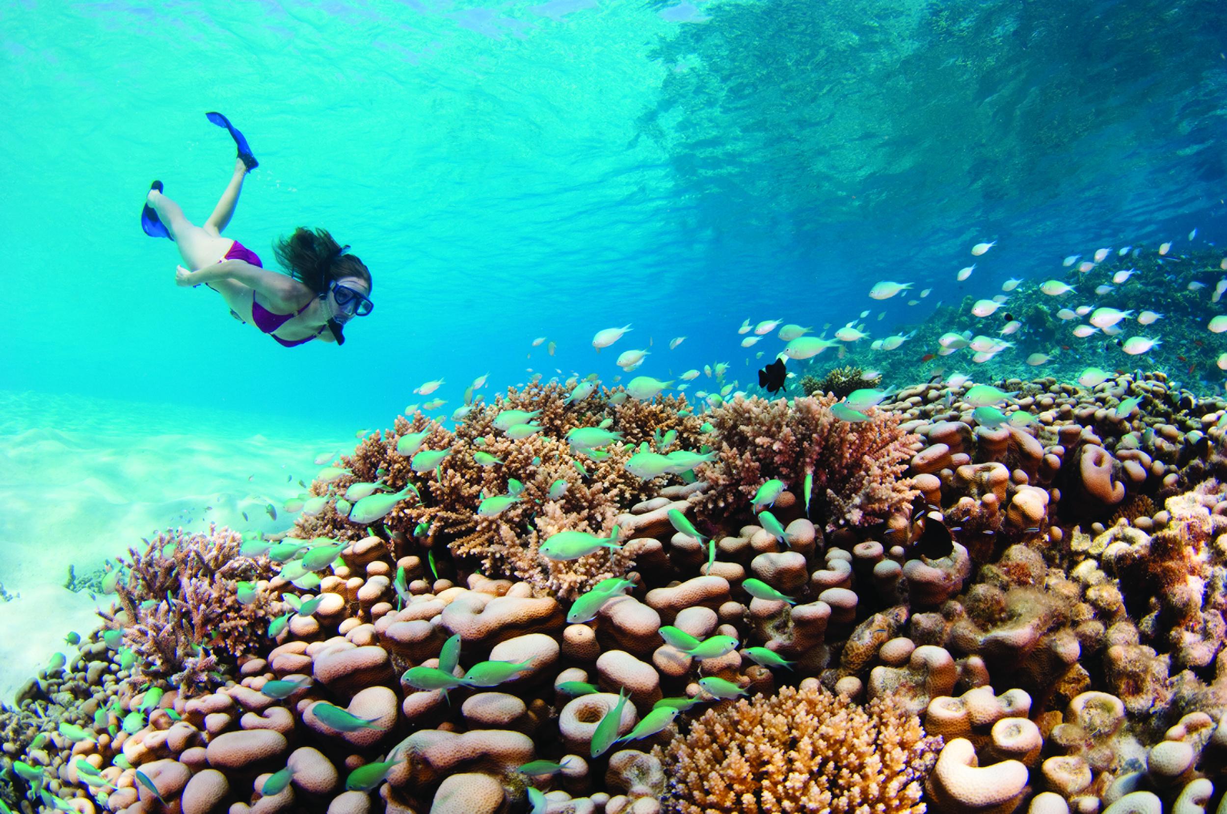 Diving at Kuda Huraa