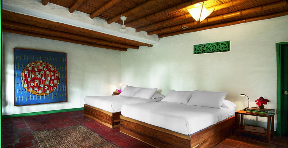 Bambusa (5).jpg