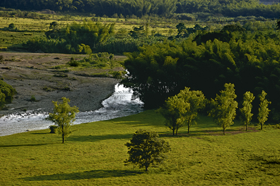 Bambusa Landscape (17).jpg