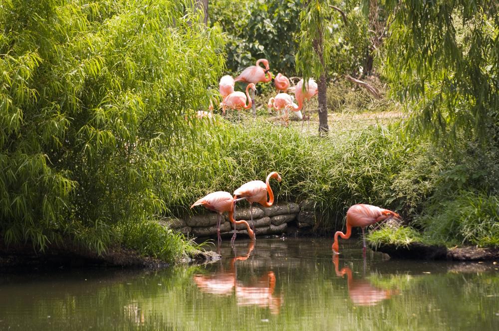 NOLA-Aubudon Zoo.jpg