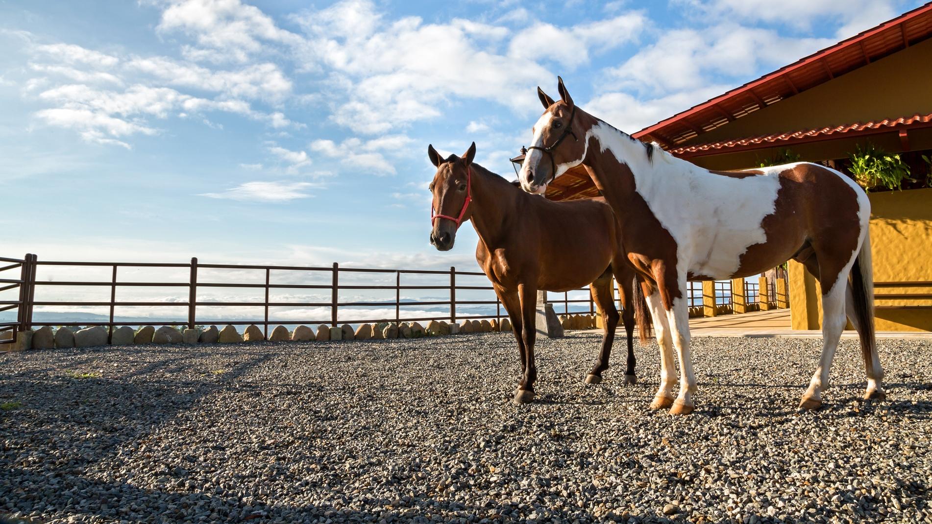 Equestrian-Experience-Breed-Horses.jpg