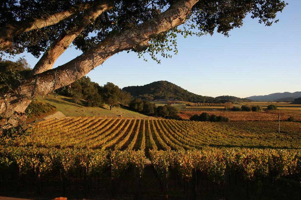Vineyard-XL.jpg