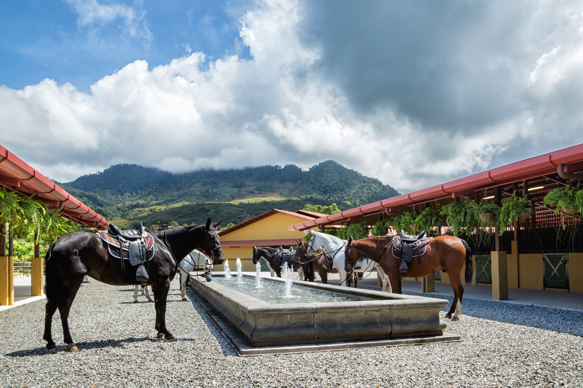 ALTA-Equestrian-Experience-Breed-Horses-in-fountain.jpg