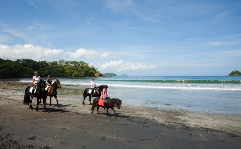 South_America_Costa_Rica_Las_Catalinas_Horse.jpg