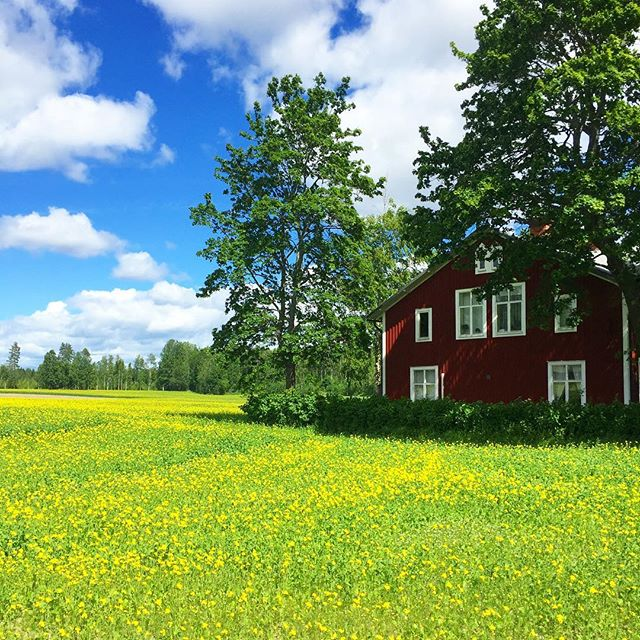 It's the official start of summer today! 🌞 And don't nobody celebrate #midsommer like the Swedes. @mawnique is weaving her flower crown 👑 🌸 and getting ready to mark the holiday with her Scandi family (her temporary office is this outrageously charming farmhouse) 🏡🇸🇪 #getpassported #fieldofdreams