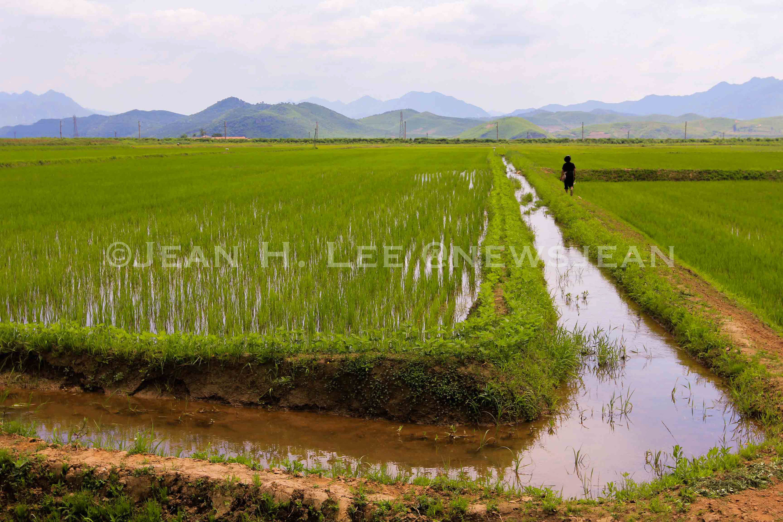 Jean Lee-NKorea-Farm-1-.jpg