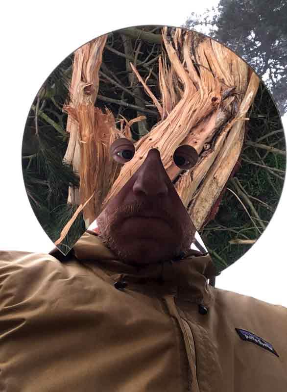 What_im_looking_at_Wiverton_fallen-tree_web.jpg