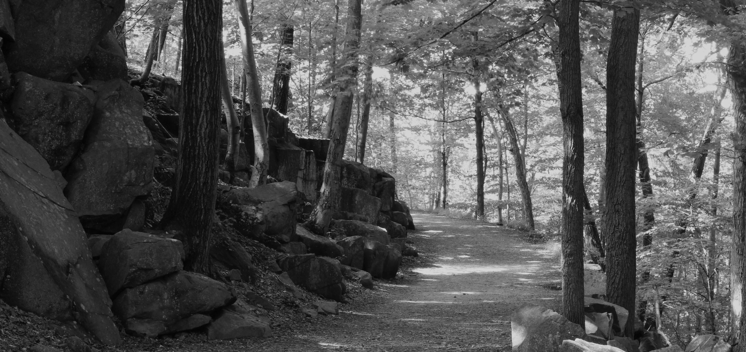 Sleeping Giant State Park Trail.JPG