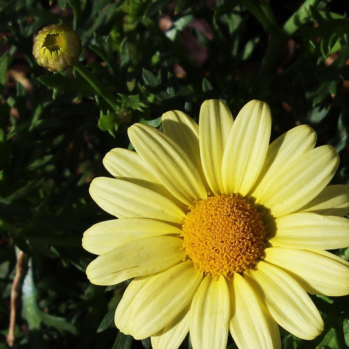 02 Flower.JPG