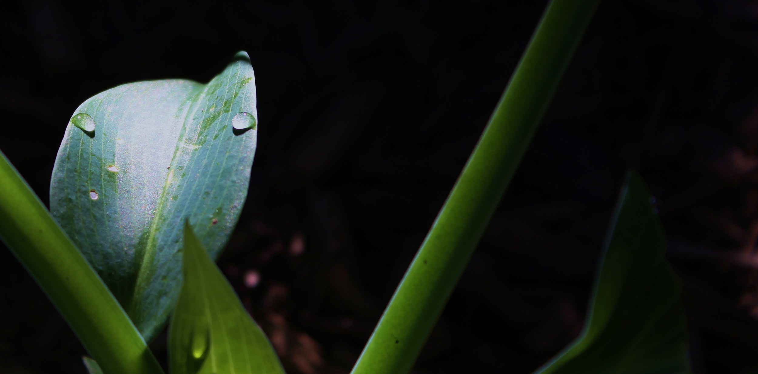 06 Dew on Leaf.JPG