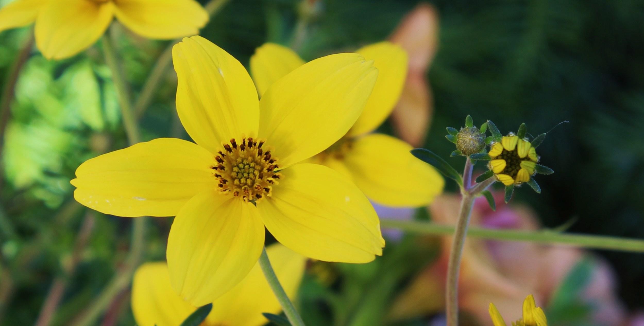 08 Sunny Flower.JPG