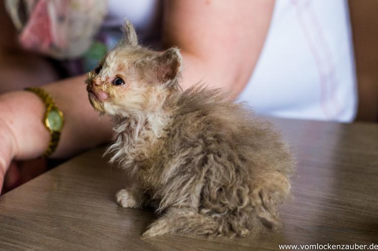Orestina 7 Wochen alt