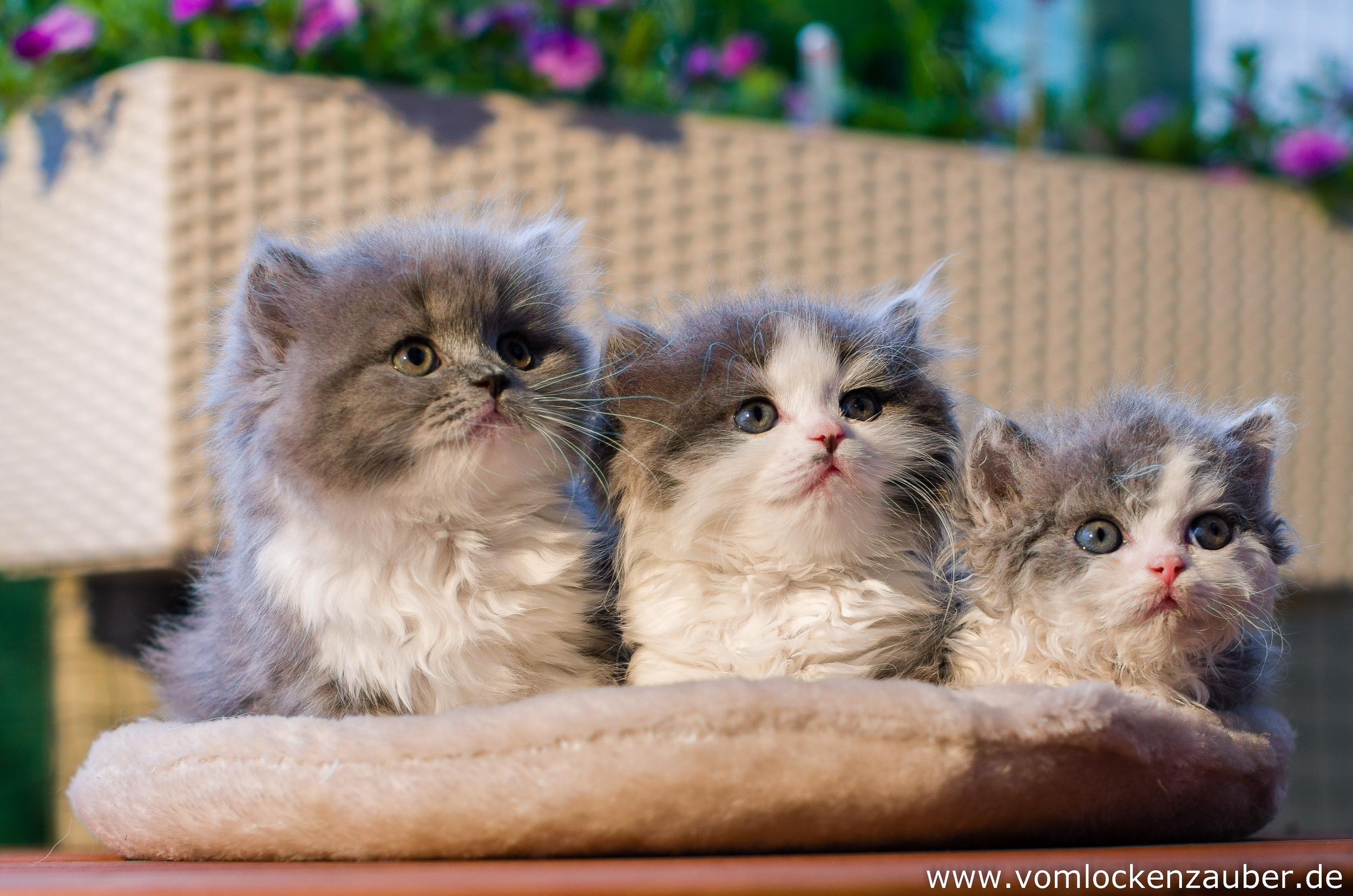 Bella,  Bonnie, Bruce