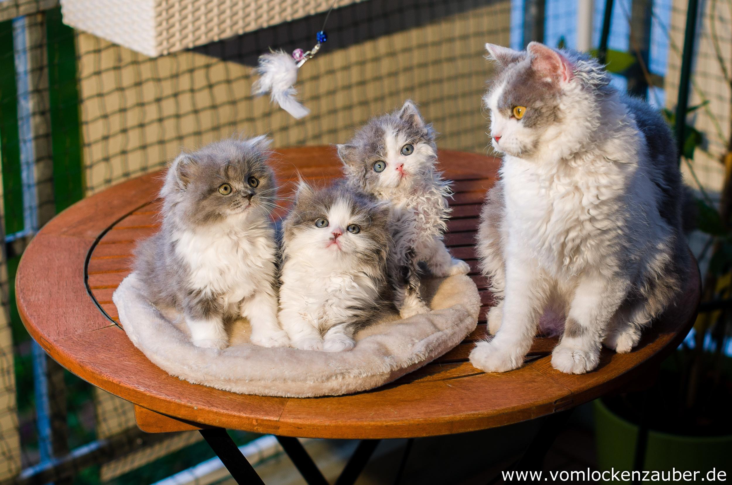 Bella,  Bonnie, Bruce, Roxana