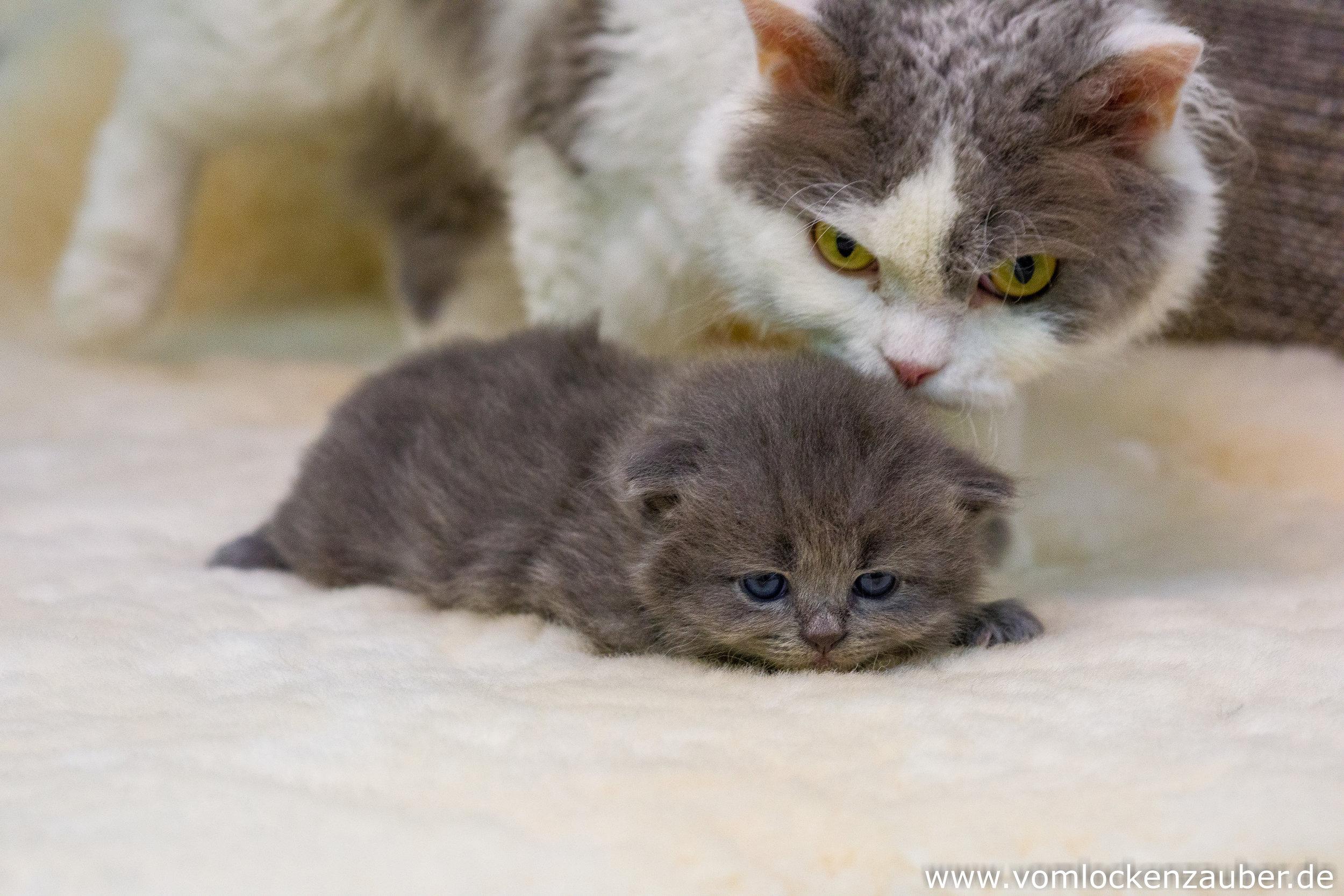 mit Mama Roxana