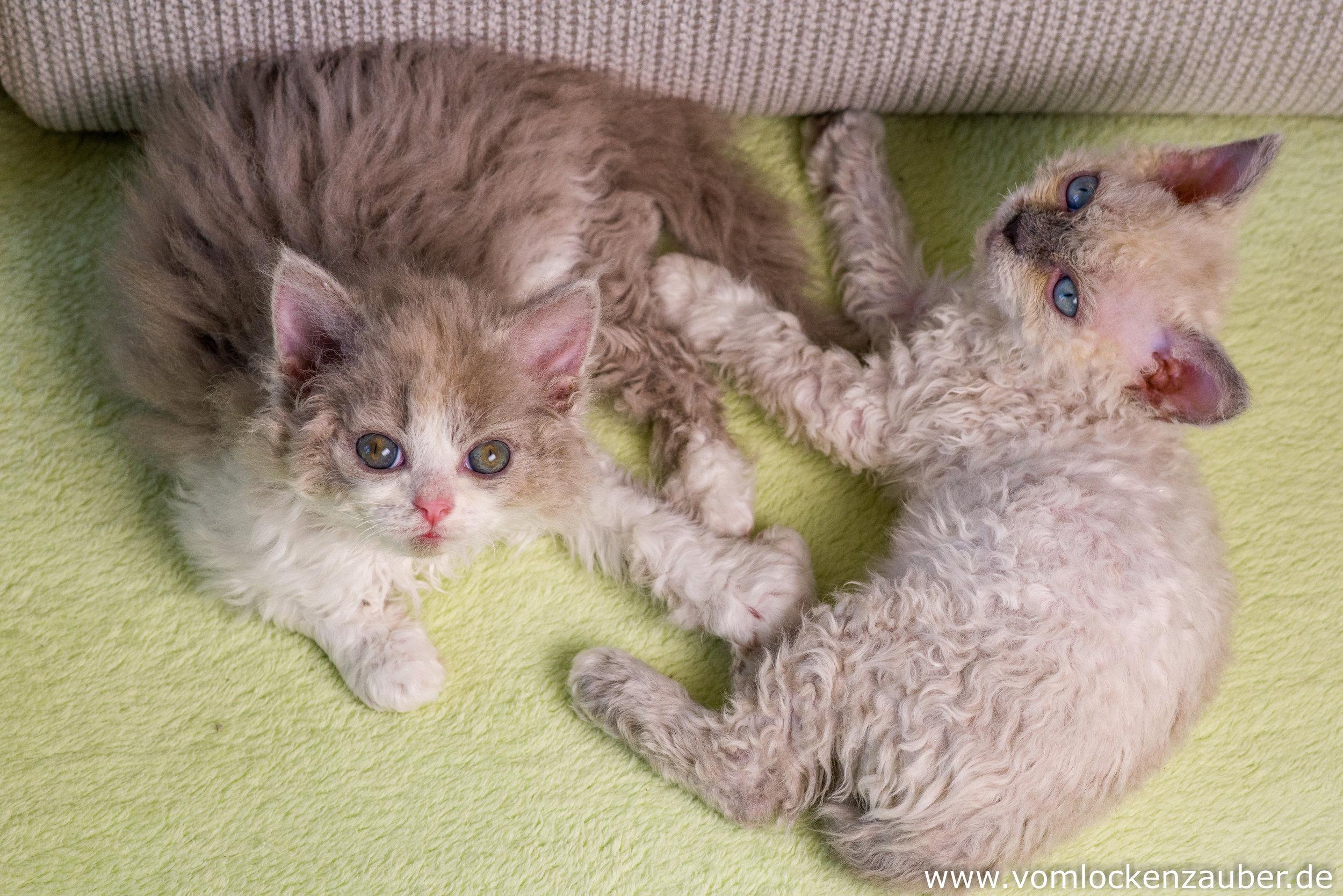 Estella Snoopy und Eddy