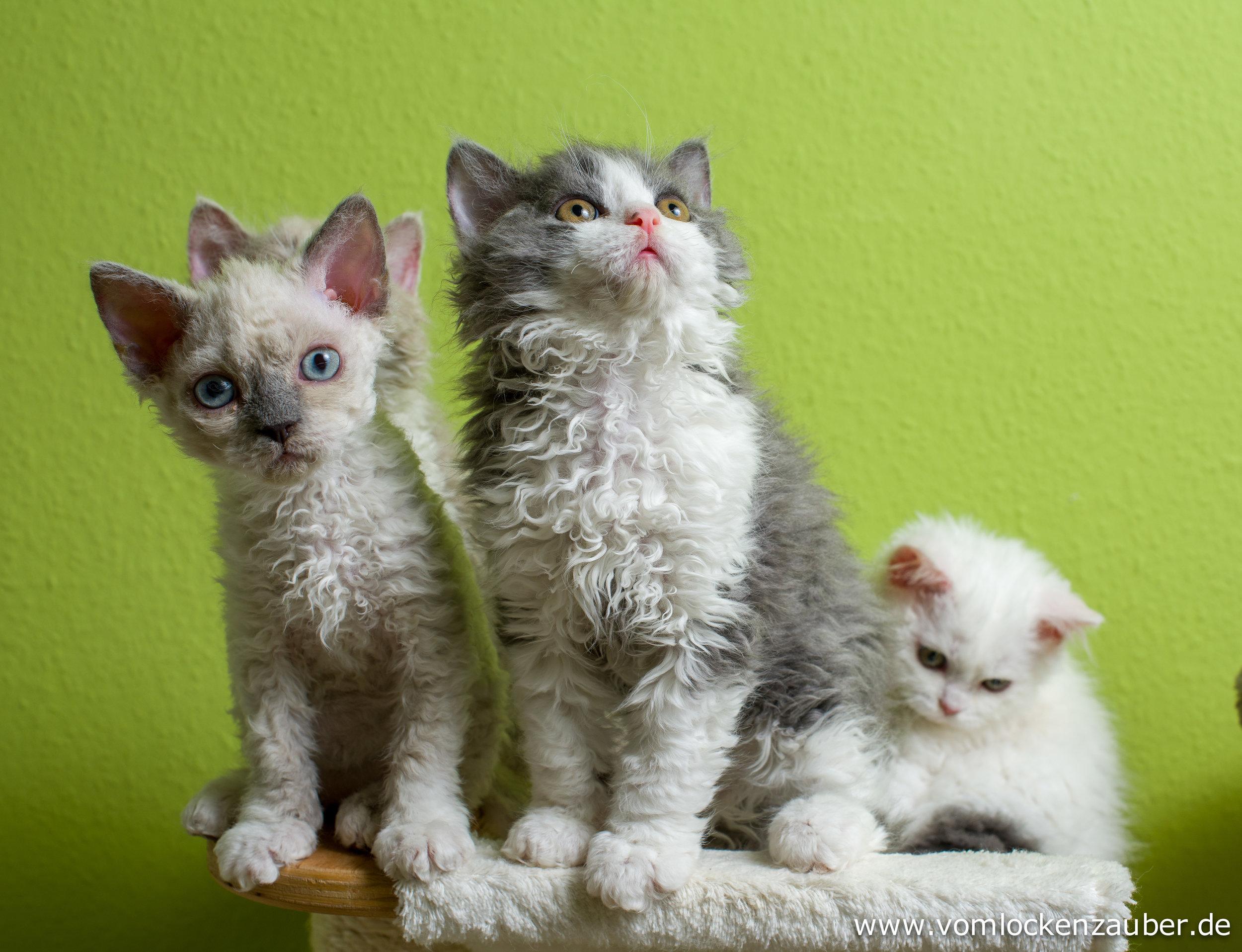 Eddy, Evo und Emilia