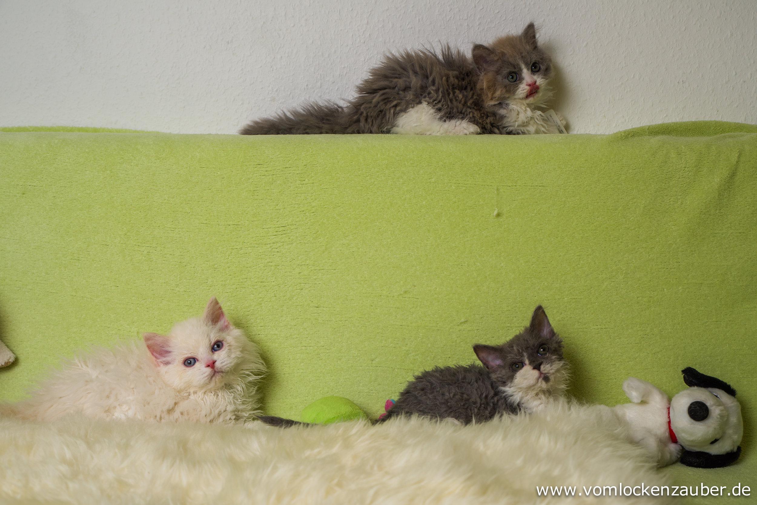 Fenek, Filou und Fenja