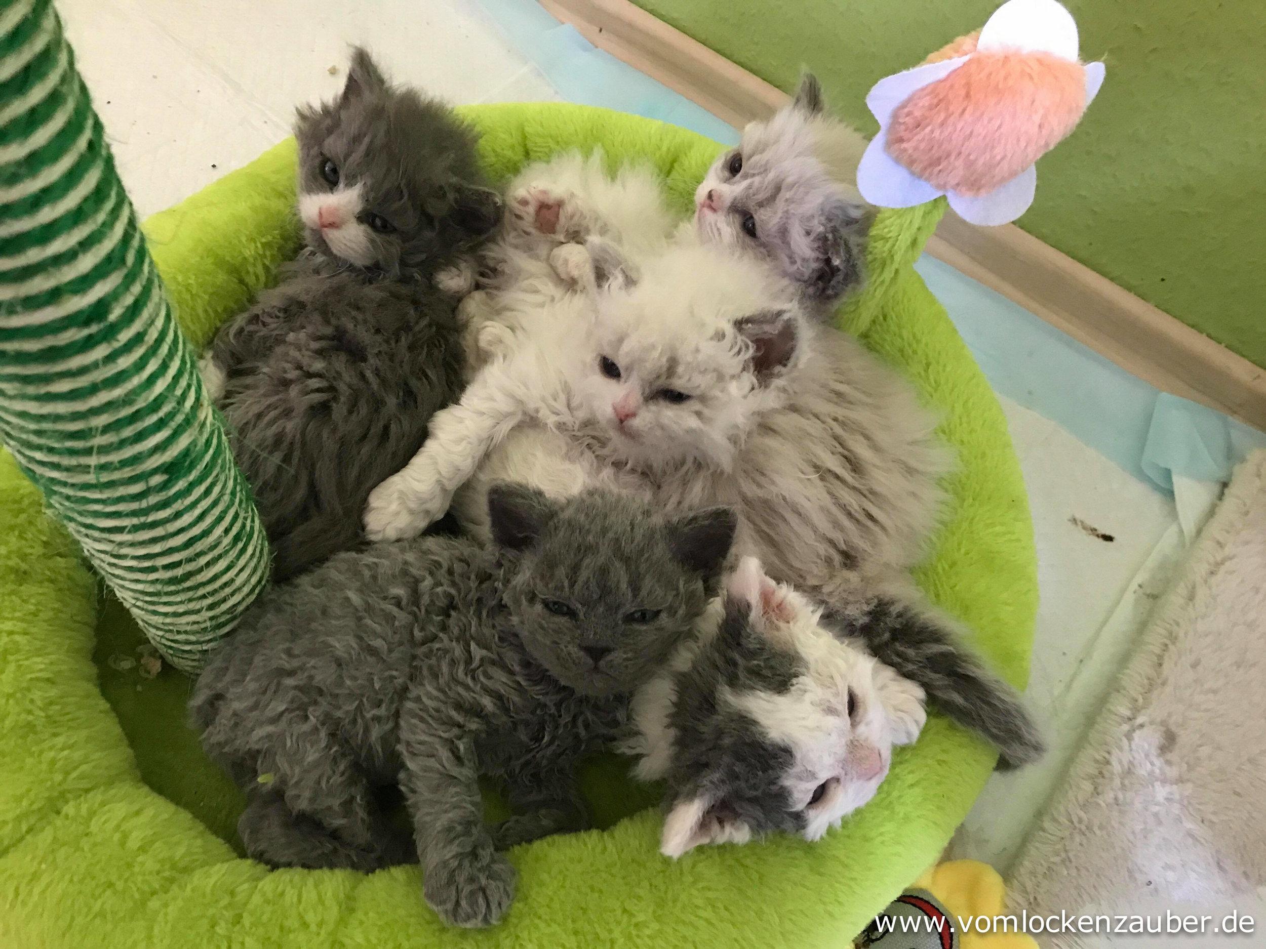 Gismo, Gina, Greta, Gracie, Grisu
