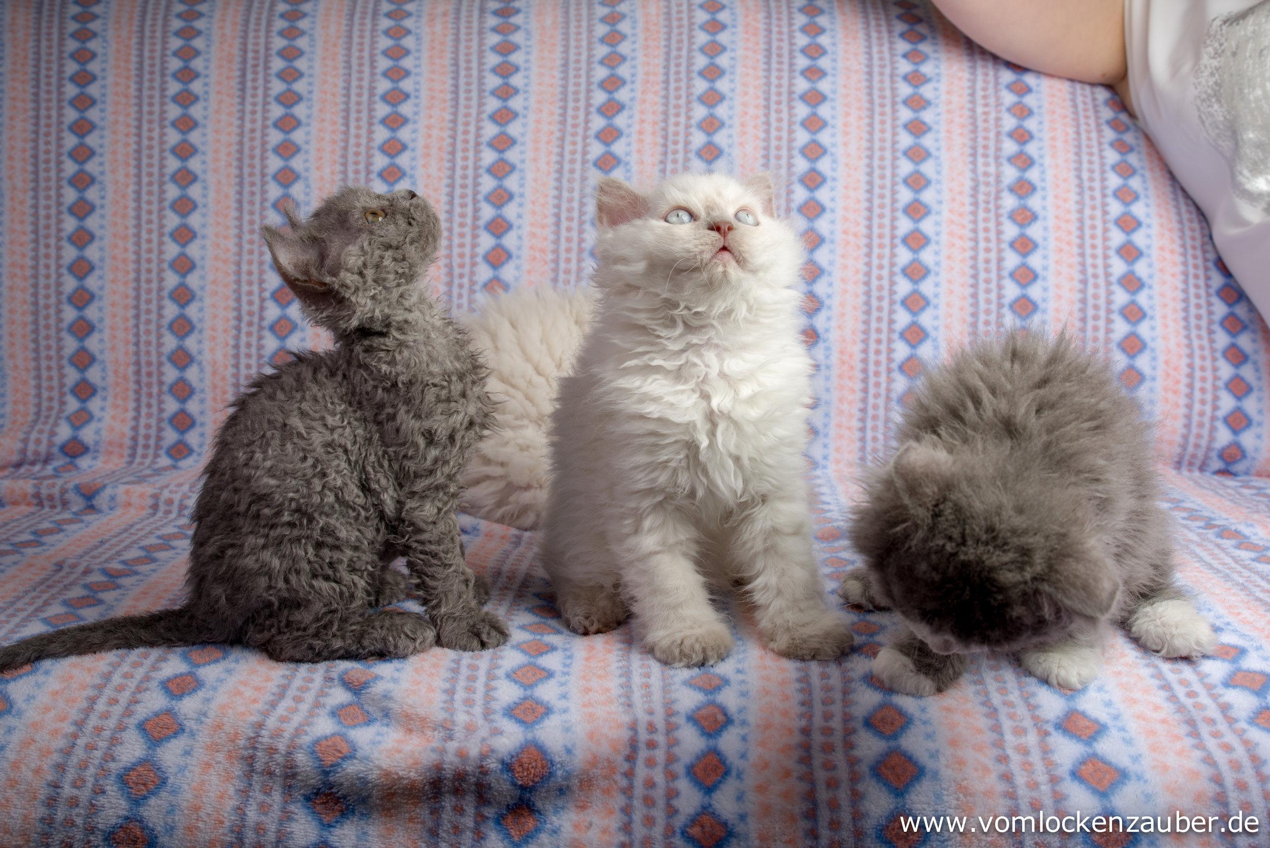Gina, Garwin und Gimso