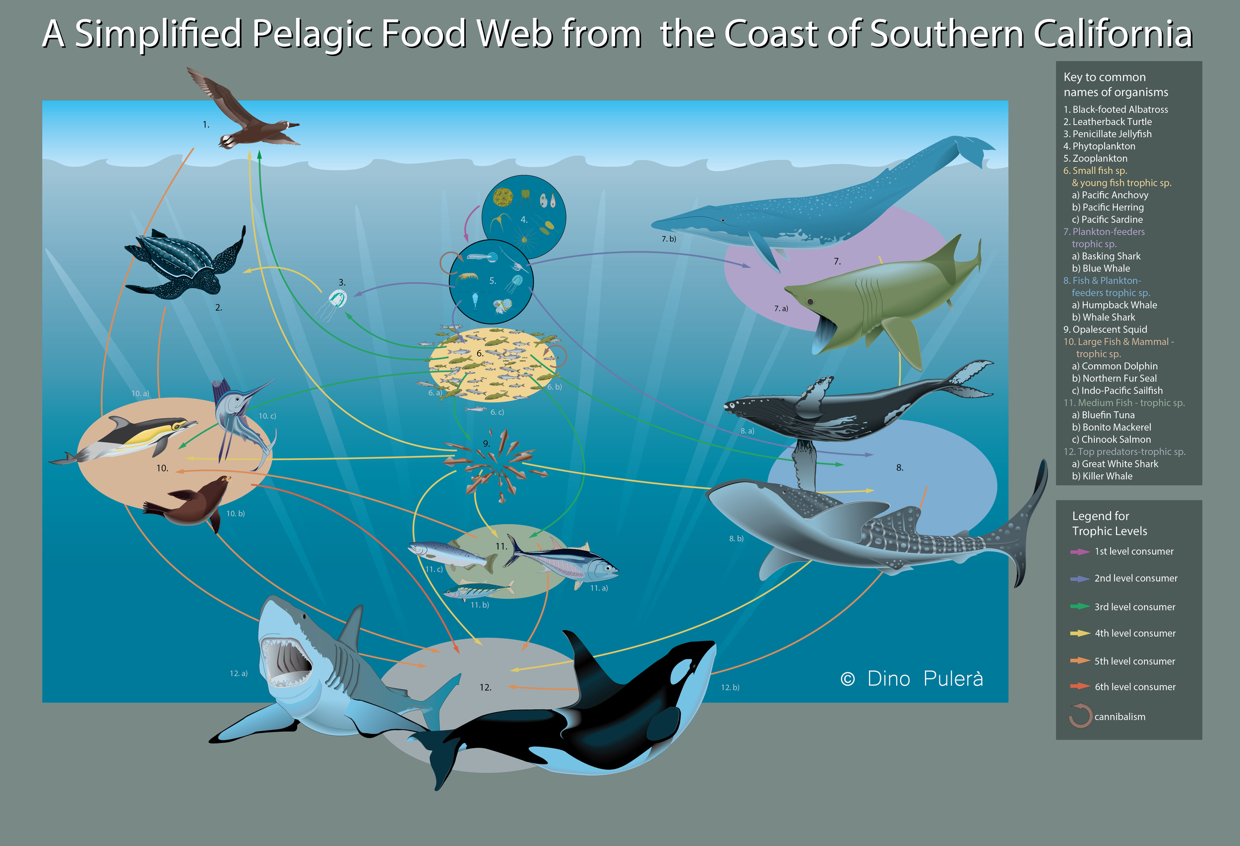 Food Web_California.jpg