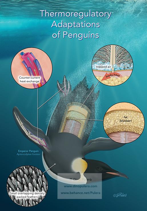 Penguin adaptions.jpg