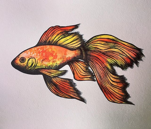Repost from @emthejackalope ・・・ Fish time! . . . . #fish #fishart #artsnacks @artsnacks #watercolor #watercolors #paint #painting #danielsmithwatercolor #worldwatercolormonth #nationalwatercolormonth #ink #inkart #inkdrawing #inkonpaper #art #swim #fishpainting #fins #wavy #ocean #warmcolors #red #orange #yellow #wausau #wausauart #wisconsin #wisconsinart #animal #animalart