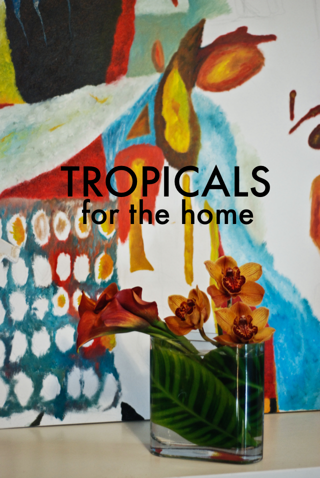 LaurylLane-Tropicals-01