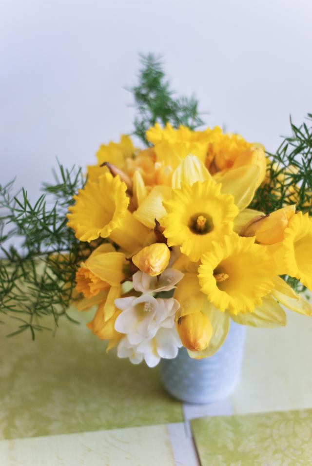 LaurylLane-Daffodils-04