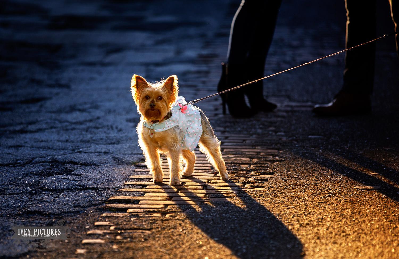 pet photographers in jacksonville