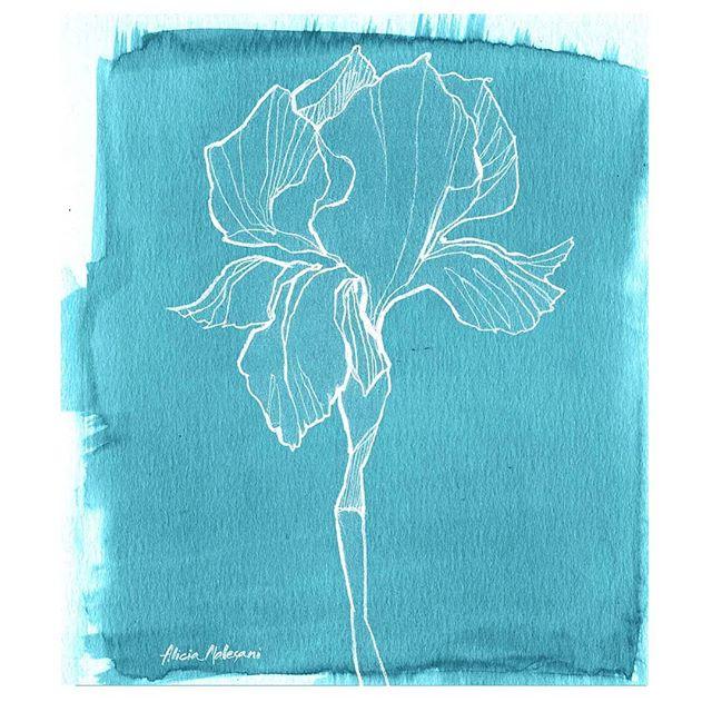 #flowerinstagram #blue #drawing #illustration #aliciamalesani