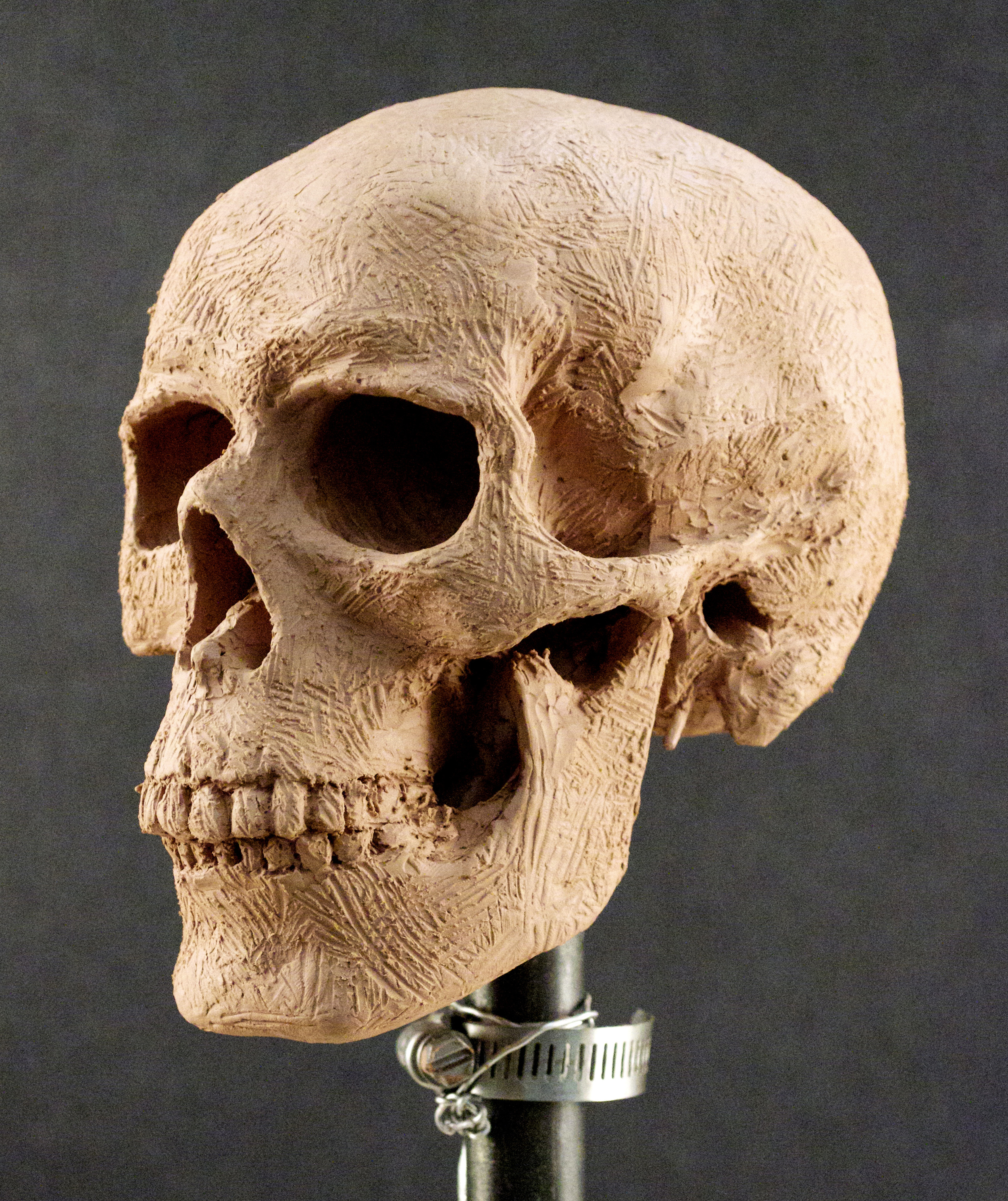 lack,e.Skull2-2.jpg