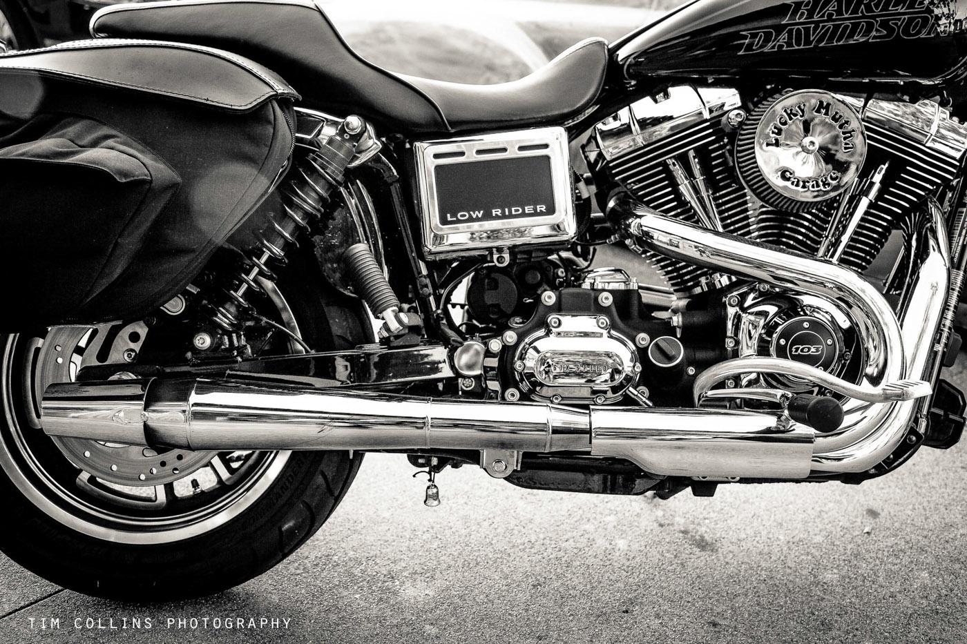 Copyright Tim Collins Photography--7.jpg