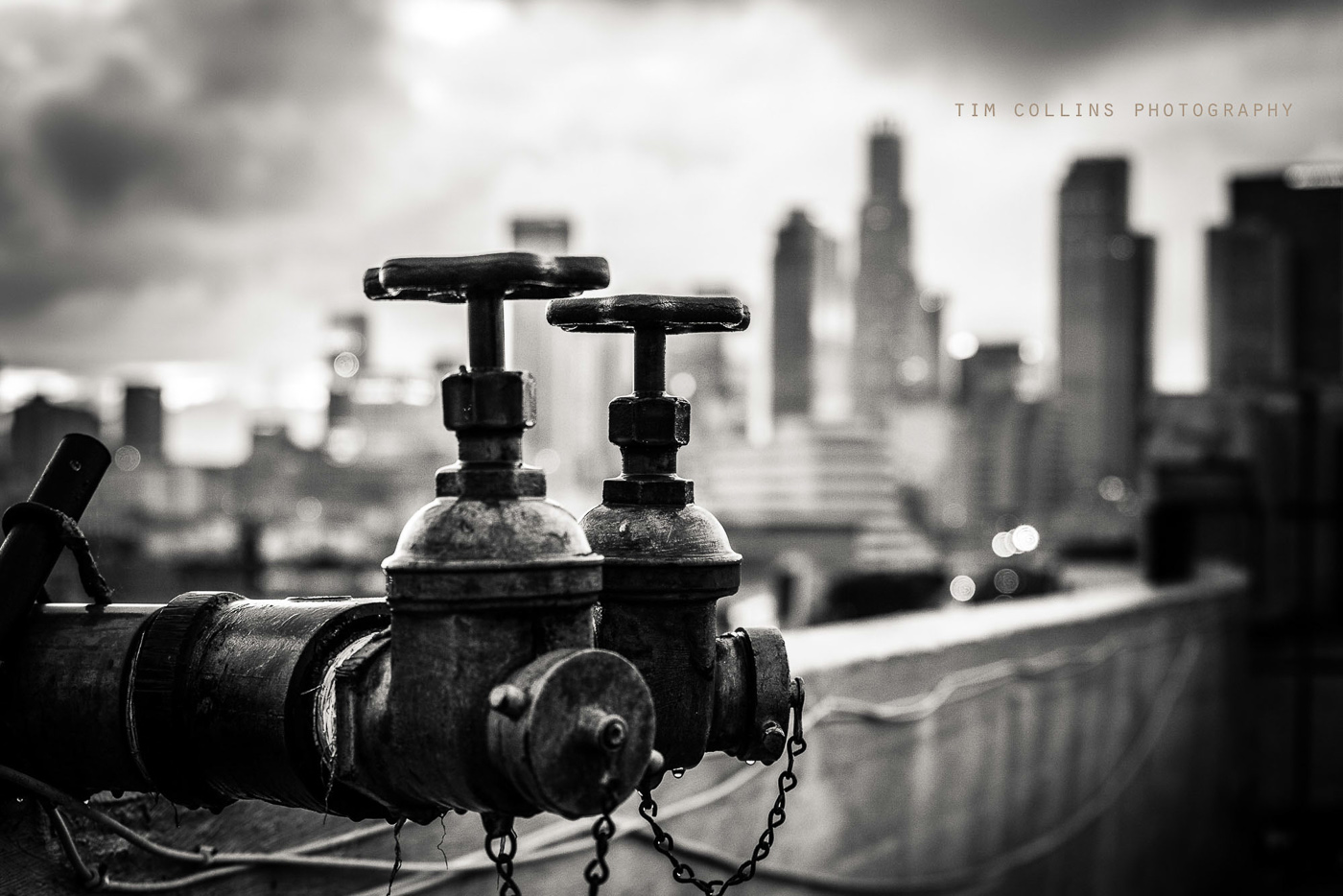 Copyright Tim Collins Photography-0232.jpg