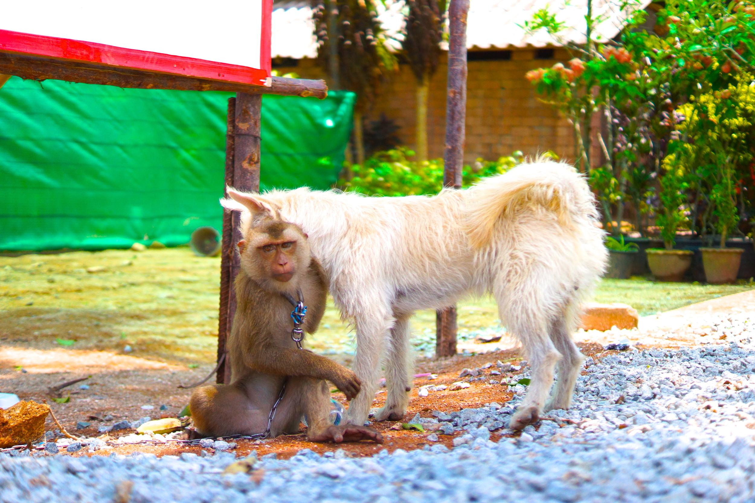 10 monkey dog.JPG