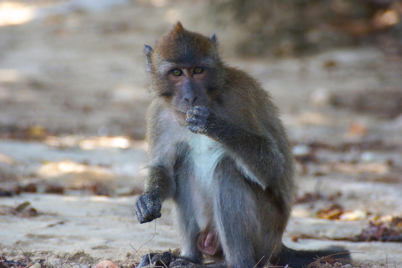 33 monkey eating again.jpg