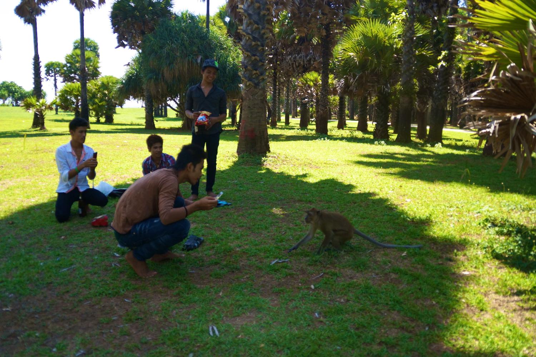 8 monkey picnic.jpg