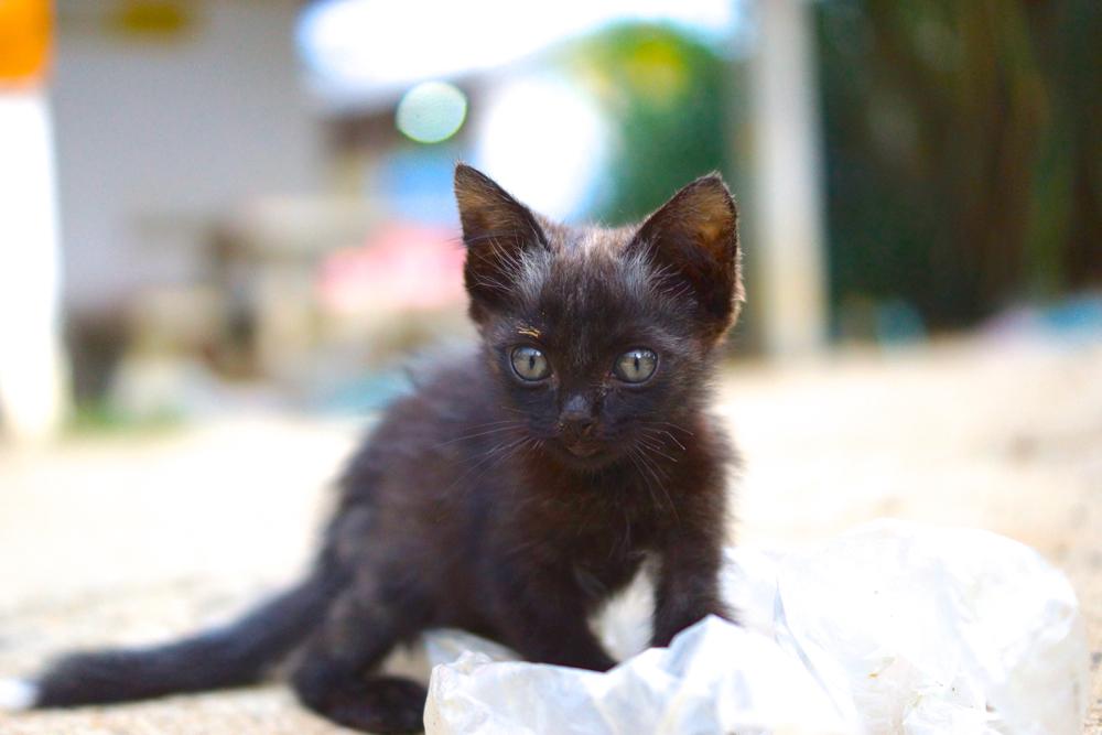 22 kitten 2.jpg