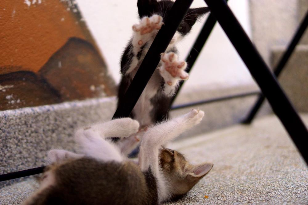 4 paws.jpg