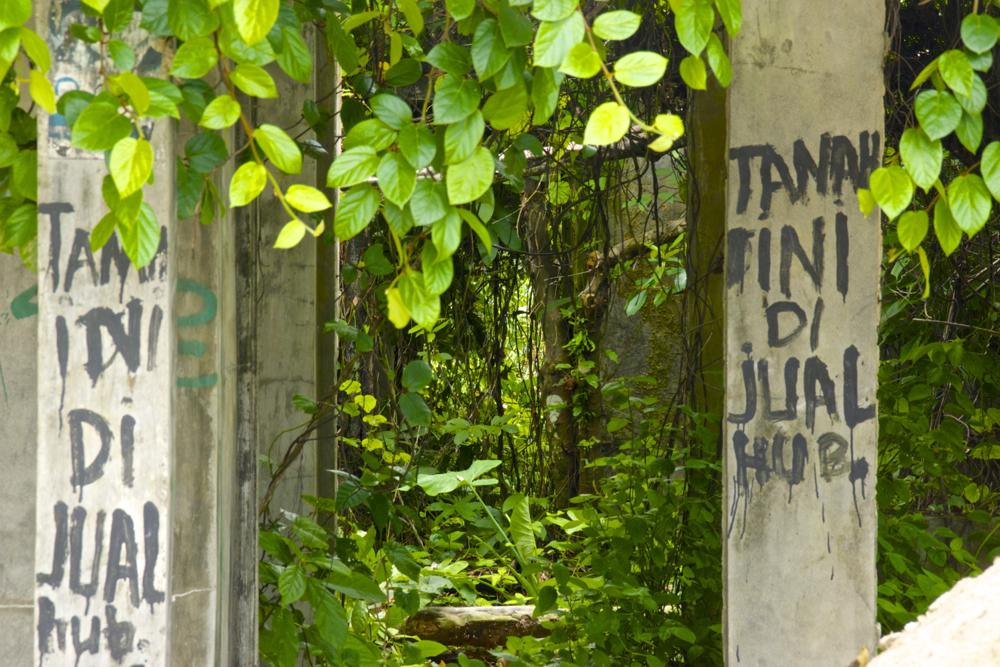 1 jungle house.jpg